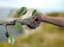 tree-handnew